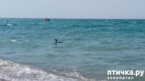 фото: Привет с моря!