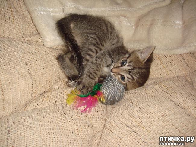 фото 7: Крошка-дракошка
