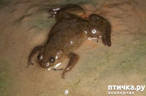 фото: Кормление шпорцевых лягушек