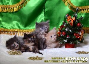 фото: Котятки и ёлка (предновогоднее)