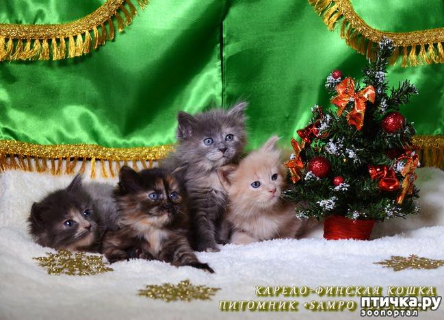 фото 1: Котятки и ёлка (предновогоднее)