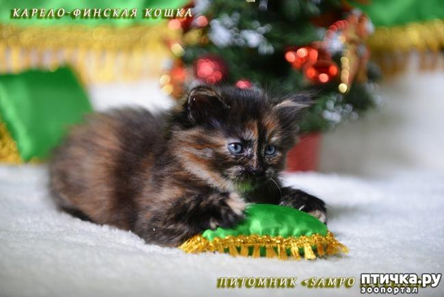фото 3: Котятки и ёлка (предновогоднее)