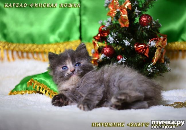 фото 5: Котятки и ёлка (предновогоднее)