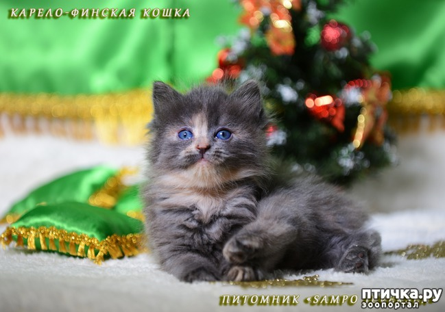 фото 6: Котятки и ёлка (предновогоднее)