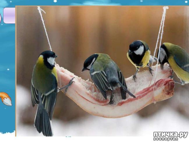 фото 6: Синичка - замечательная птичка)