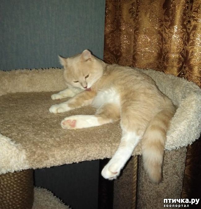 фото 2: Как кошка с собакой! Или как Вы приучали щенка к совместному проживанию (квартира) с котом (кошкой)