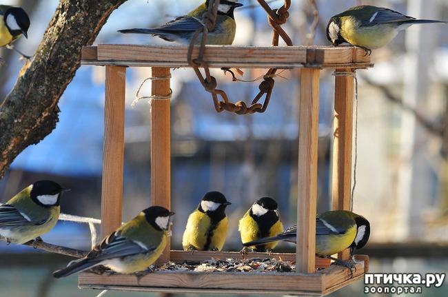 фото 7: Синичка - замечательная птичка)