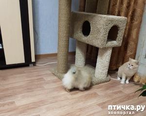 фото: Как кошка с собакой! Или как Вы приучали щенка к совместному проживанию (квартира) с котом (кошкой)