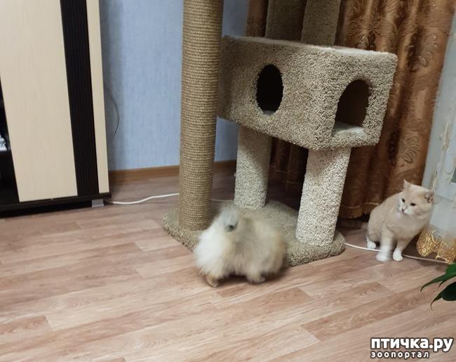 фото 1: Как кошка с собакой! Или как Вы приучали щенка к совместному проживанию (квартира) с котом (кошкой)
