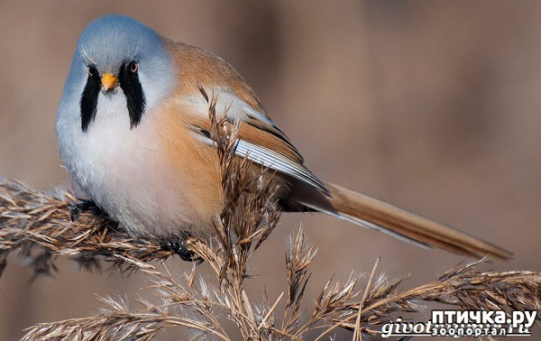 фото 14: Синичка - замечательная птичка)