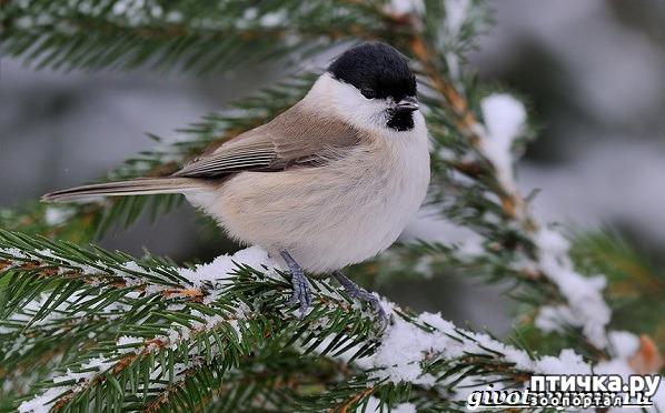 фото 15: Синичка - замечательная птичка)