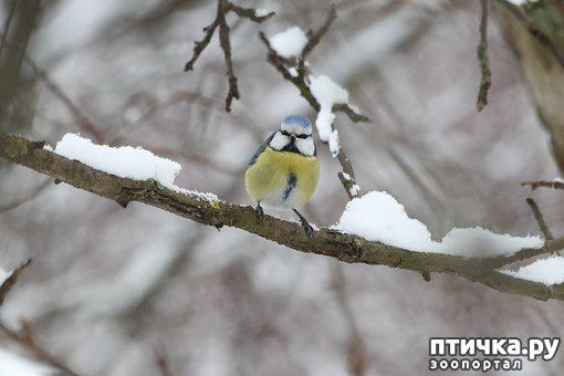 фото 1: Покормите птиц зимой!