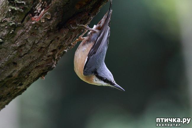 фото 4: Покормите птиц зимой!