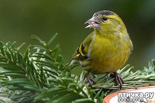 фото 8: Покормите птиц зимой!
