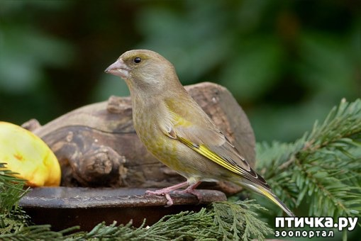 фото 9: Покормите птиц зимой!