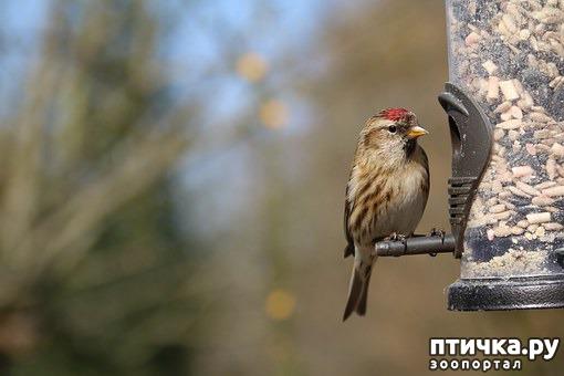 фото 10: Покормите птиц зимой!