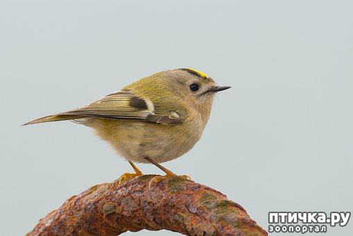 фото 11: Покормите птиц зимой!
