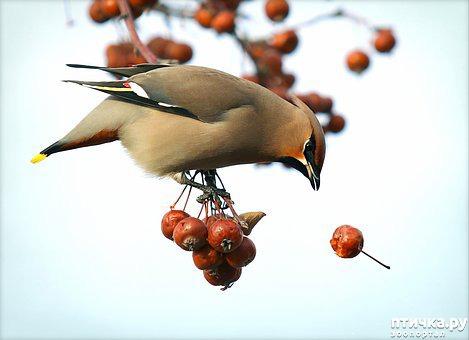 фото 12: Покормите птиц зимой!