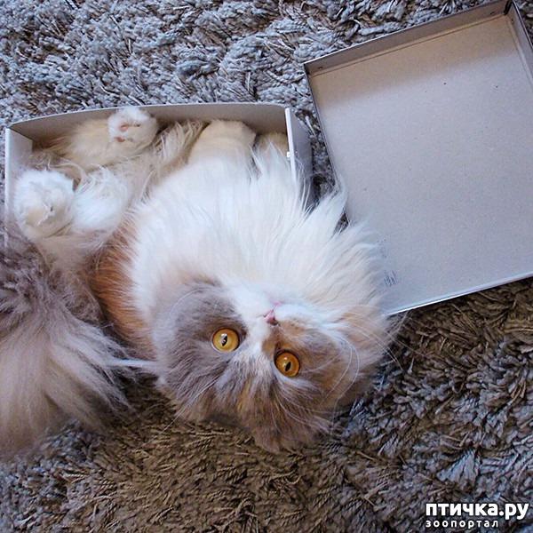 фото 2: Кошки – это пушистая жидкость, часть 2