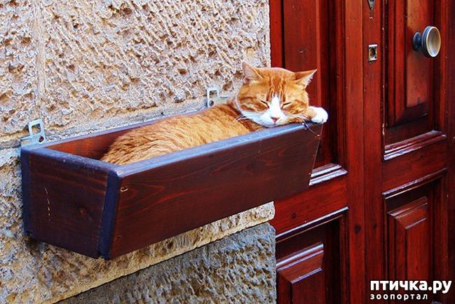 фото 3: Кошки – это пушистая жидкость, часть 2