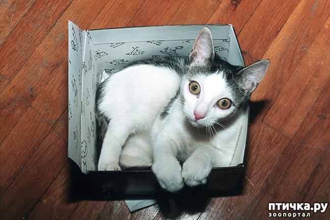 фото 5: Кошки – это пушистая жидкость, часть 2