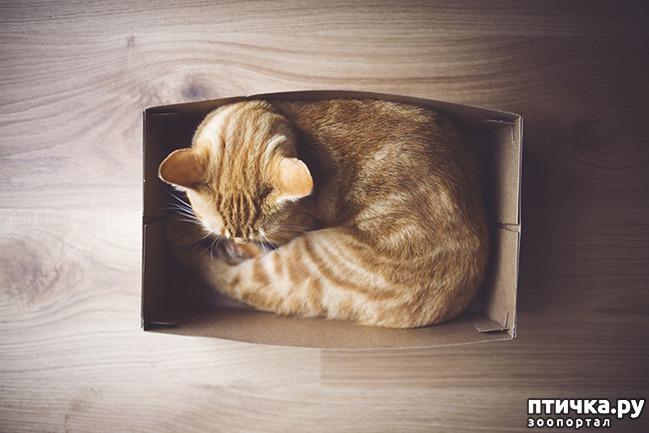 фото 6: Кошки – это пушистая жидкость, часть 2