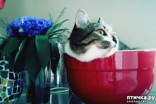 фото 7: Кошки – это пушистая жидкость, часть 2