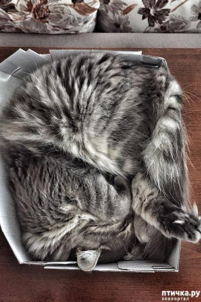 фото 8: Кошки – это пушистая жидкость, часть 2