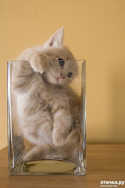 фото 9: Кошки – это пушистая жидкость, часть 2
