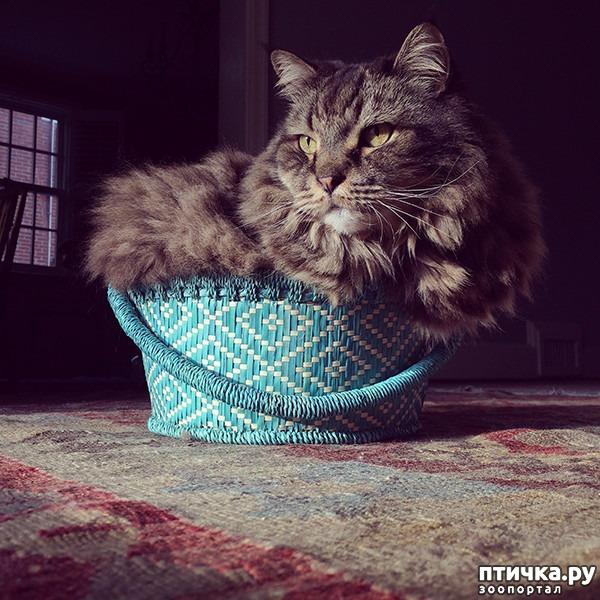 фото 10: Кошки – это пушистая жидкость, часть 2