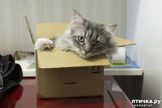 фото 11: Кошки – это пушистая жидкость, часть 2