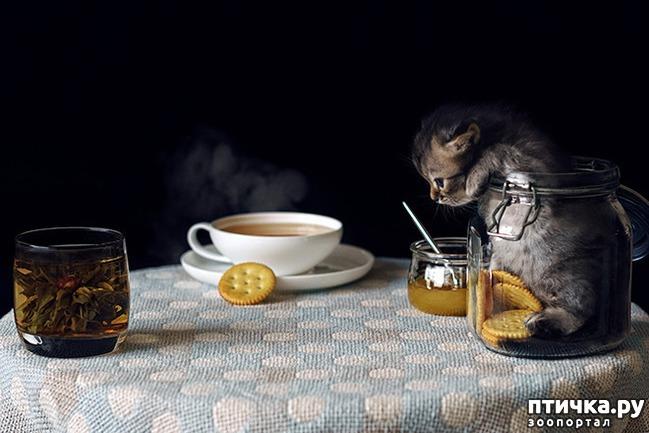 фото 12: Кошки – это пушистая жидкость, часть 2