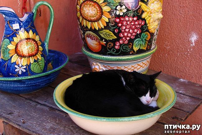 фото 13: Кошки – это пушистая жидкость, часть 2