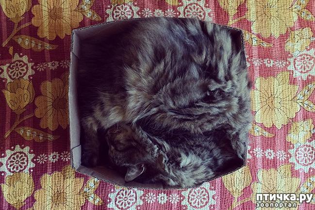 фото 14: Кошки – это пушистая жидкость, часть 2