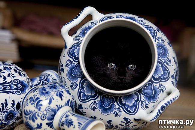 фото 15: Кошки – это пушистая жидкость, часть 2