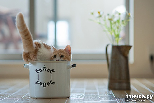 фото 16: Кошки – это пушистая жидкость, часть 2