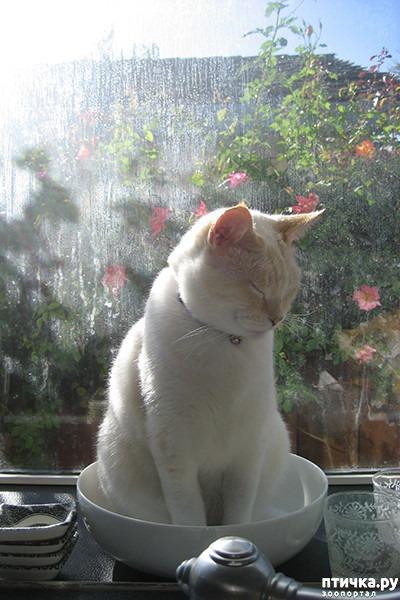 фото 17: Кошки – это пушистая жидкость, часть 2