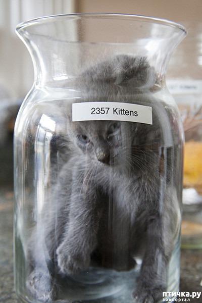 фото 18: Кошки – это пушистая жидкость, часть 2