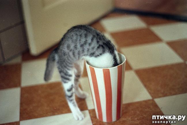фото 19: Кошки – это пушистая жидкость, часть 2