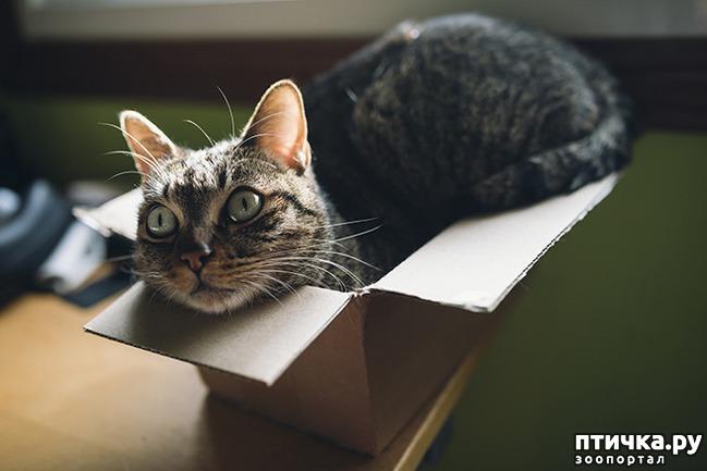 фото 20: Кошки – это пушистая жидкость, часть 2