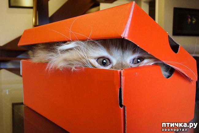 фото 21: Кошки – это пушистая жидкость, часть 2