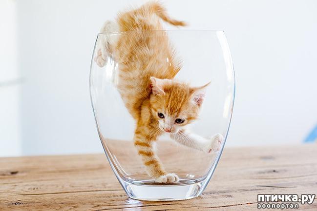 фото 22: Кошки – это пушистая жидкость, часть 2