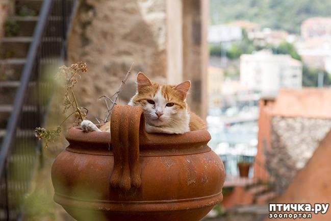 фото 24: Кошки – это пушистая жидкость, часть 2