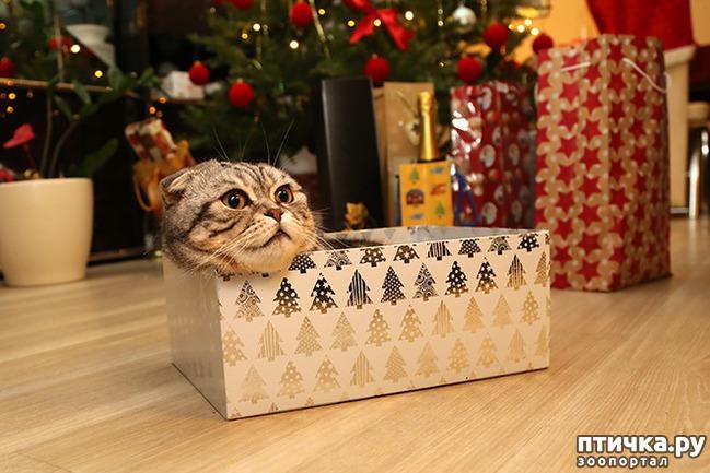 фото 25: Кошки – это пушистая жидкость, часть 2