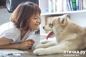 фото: Зачем собаки облизывают лицо?