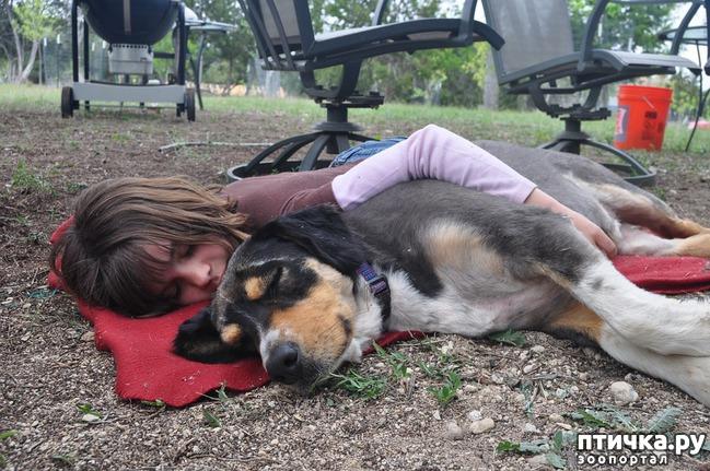 фото 2: Зачем собаки облизывают лицо?