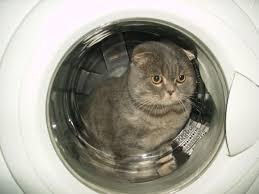 фото: Где мой кот