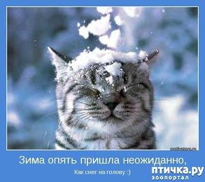 фото: Котоматрица: Кот и первый снег!