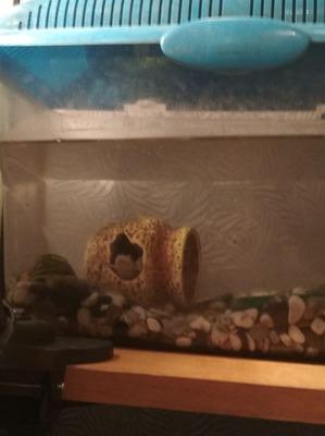 фото: Лягушка в домике