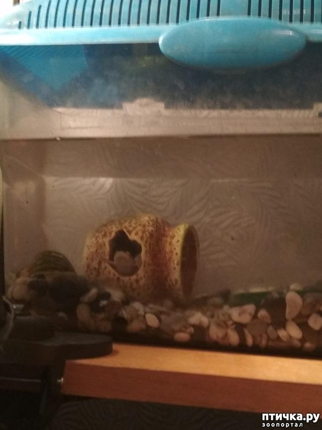 фото 1: Лягушка в домике